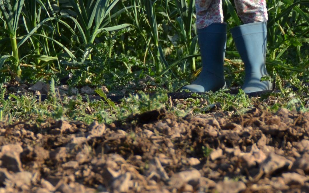 16 de març: Agroecologia i Economia Feminista: bones pràctiques per la sostenibilitat de la vida
